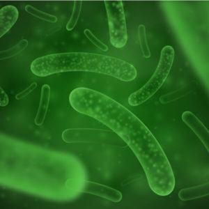 Single Strain Probiotics
